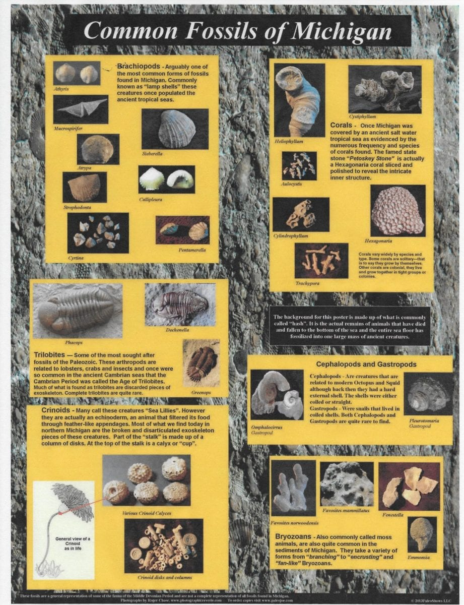 Common Fossils Of Michigan Poster
