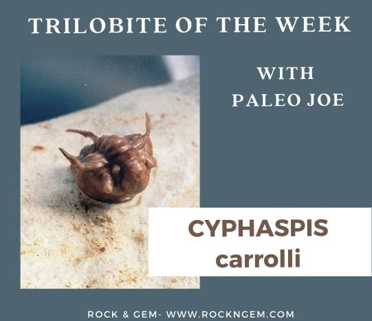 Trilobite of the Week: CYPHASPIS carrolli