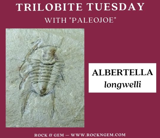 Trilobite of the Week: ALBERTELLA longwelli