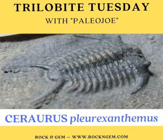 Trilobite of the Week: CERAURUS pleurexanthemus